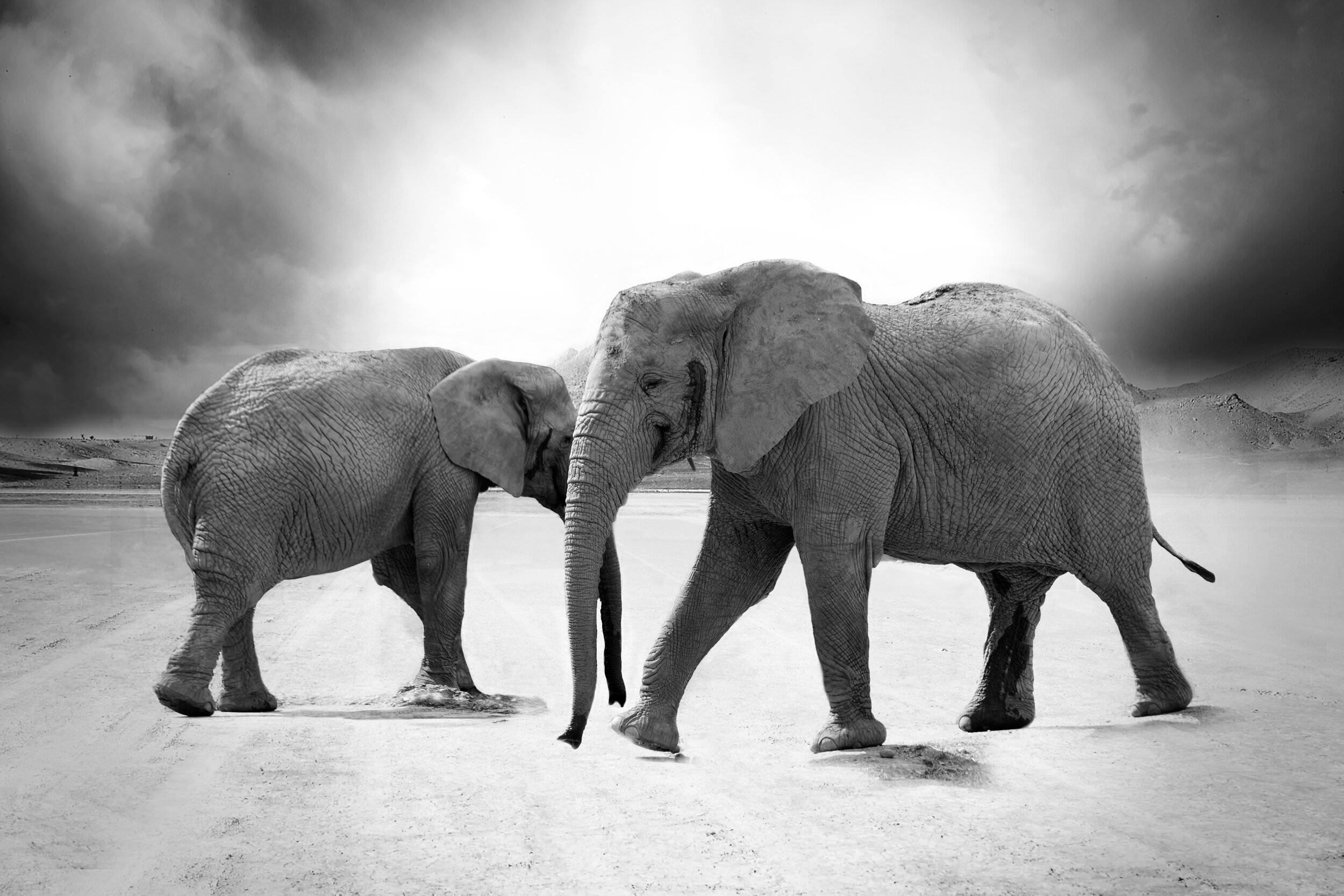 nature-africa-animals-zoo-33394
