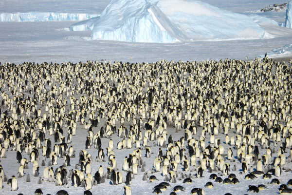 Where Penguins Rule