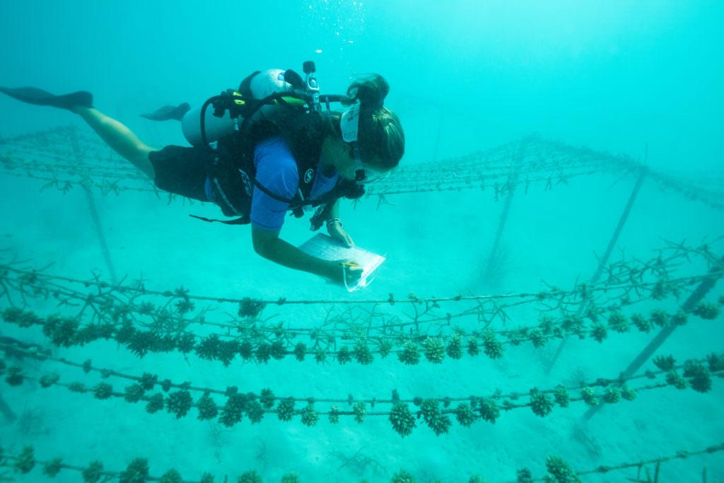 Gili_Lankanfushi-Sept_2015-David_Evans_011-1