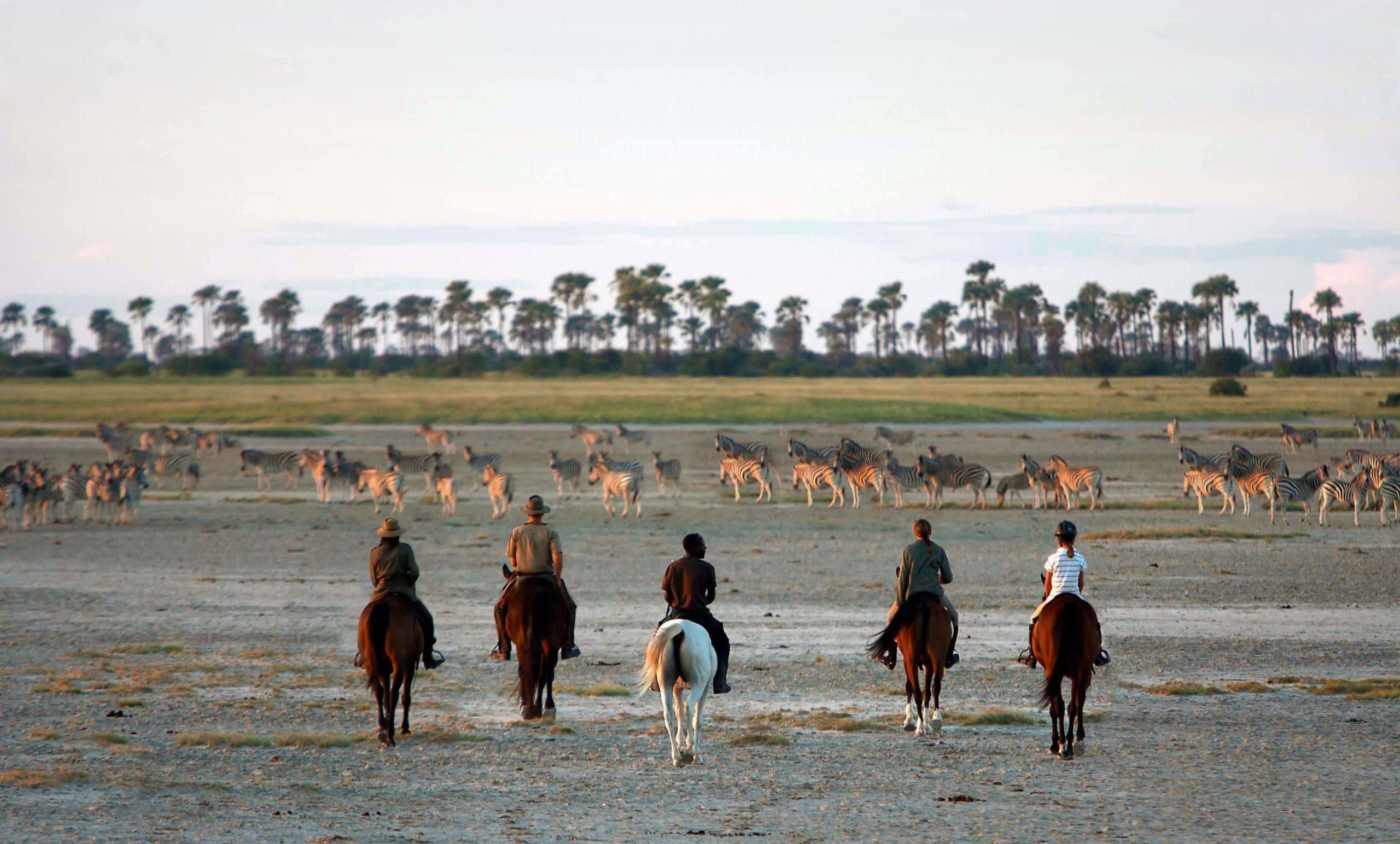 Pangolin Safari