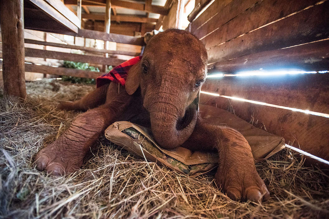 Adopt & Play with a Rescued Baby Elephant