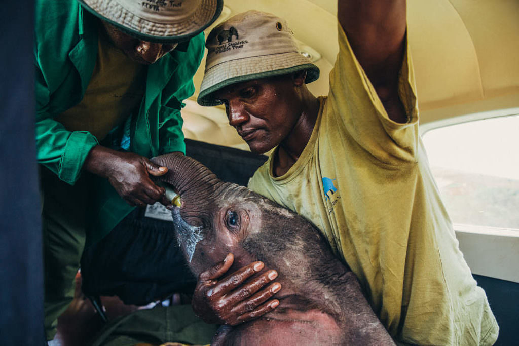 Rescued Baby Elephant