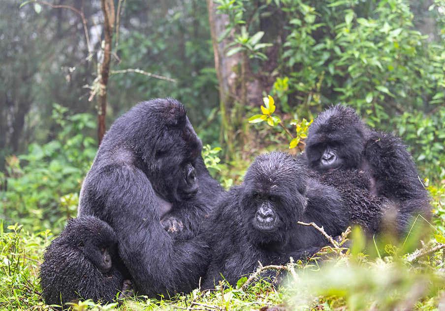 Sabyinyo-gorilla-trek-2-904x633-1