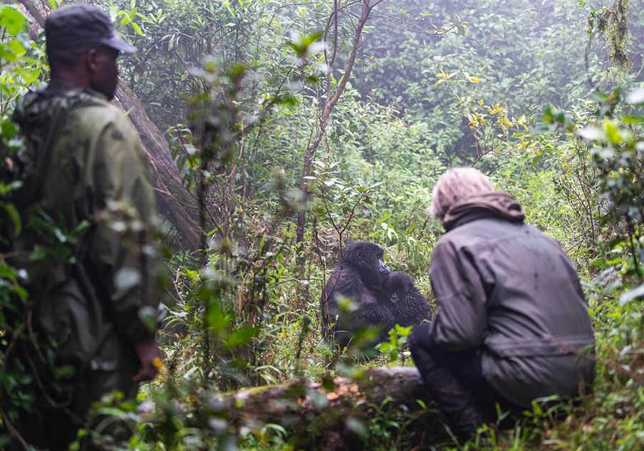 gorilla-trek-3-904x633-1