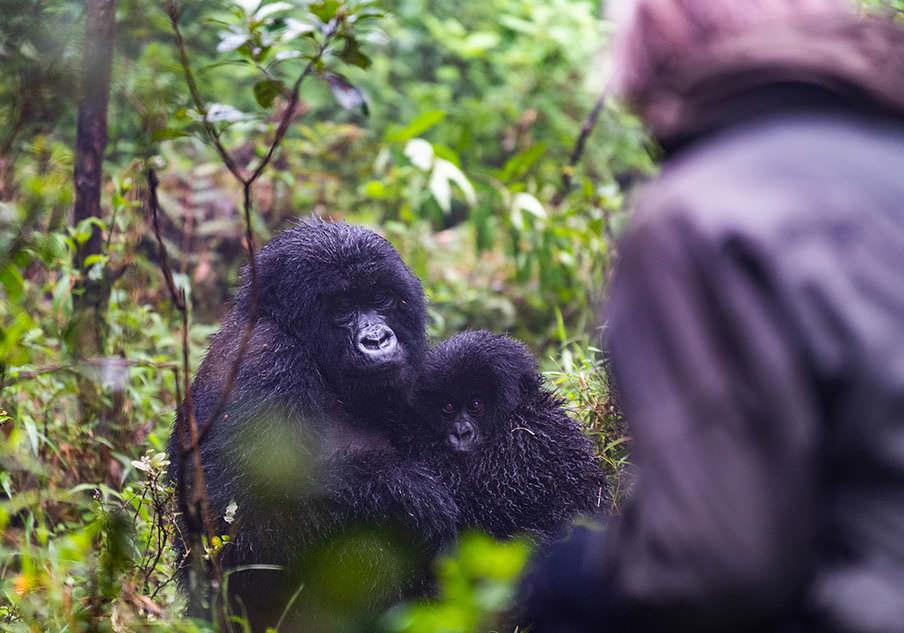gorilla-trek-4-904x633-1