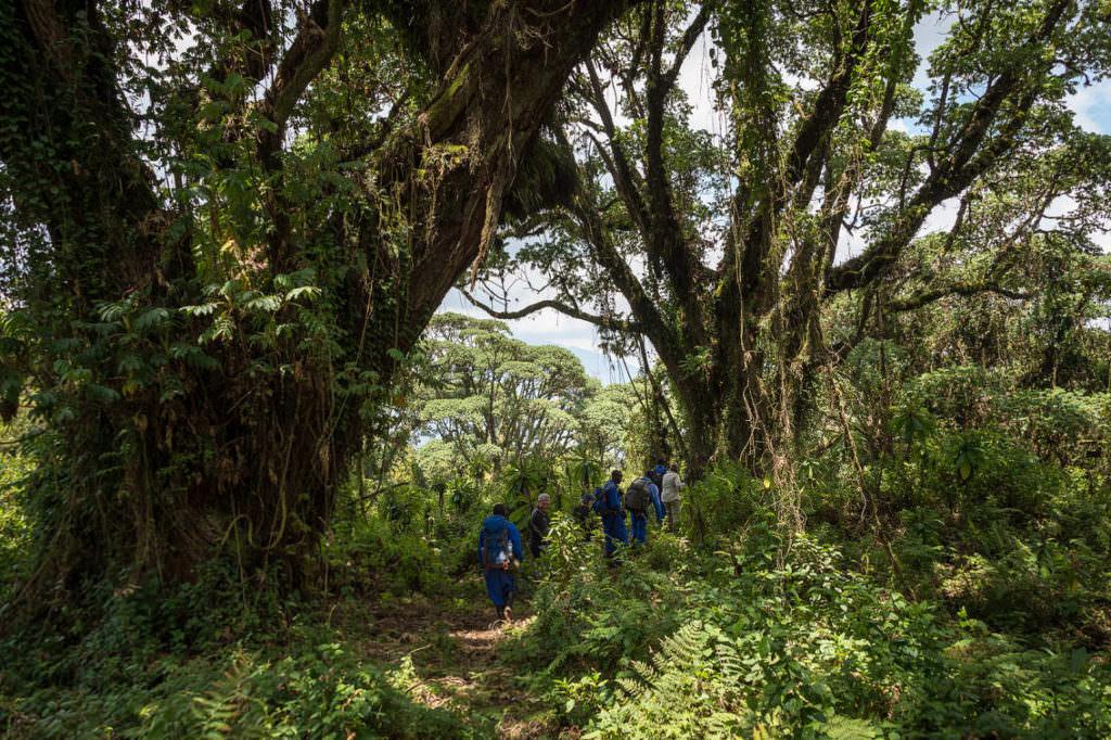 rwanda-237e-Wilderness